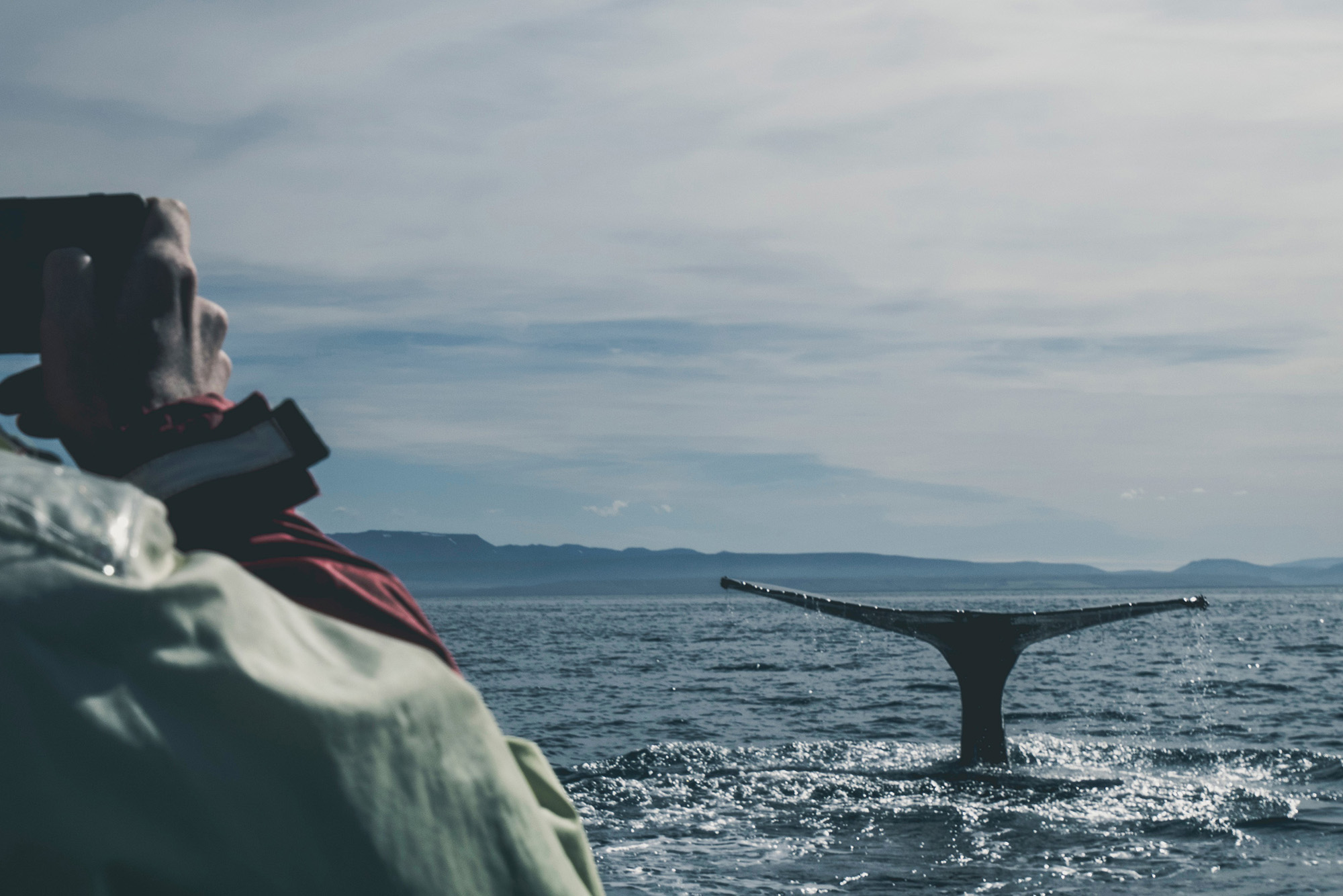 whale-watching-iceland-wolfare-com