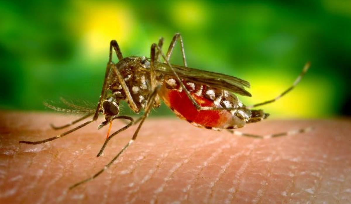 Prevention of malaria. These five steps should protect you